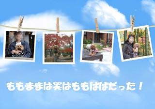decojiro-20091225-183016.jpg