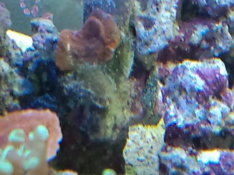 藻と生物兵器100923_02