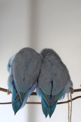 寄り添う2羽