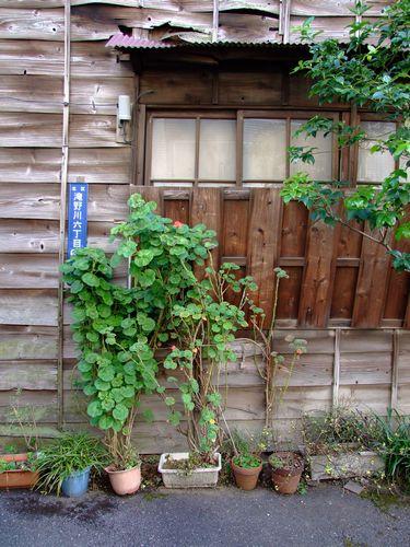 2010_02050081.jpg
