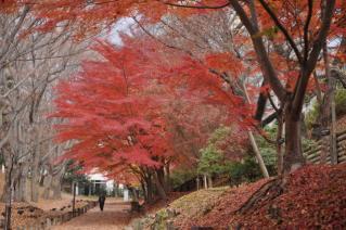 zyugemu-b-tokusyu-2009-11-003.jpg