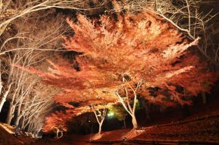 2009年11月長野遠征009
