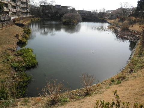 初春の池66