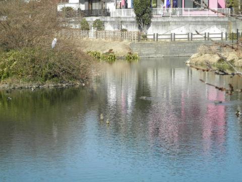 初春の池61