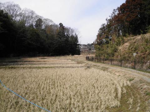 初春の田んぼ192