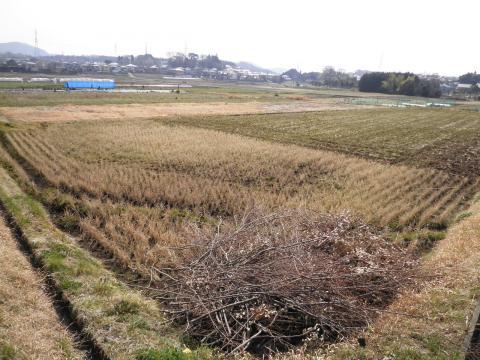 初春の田んぼ31