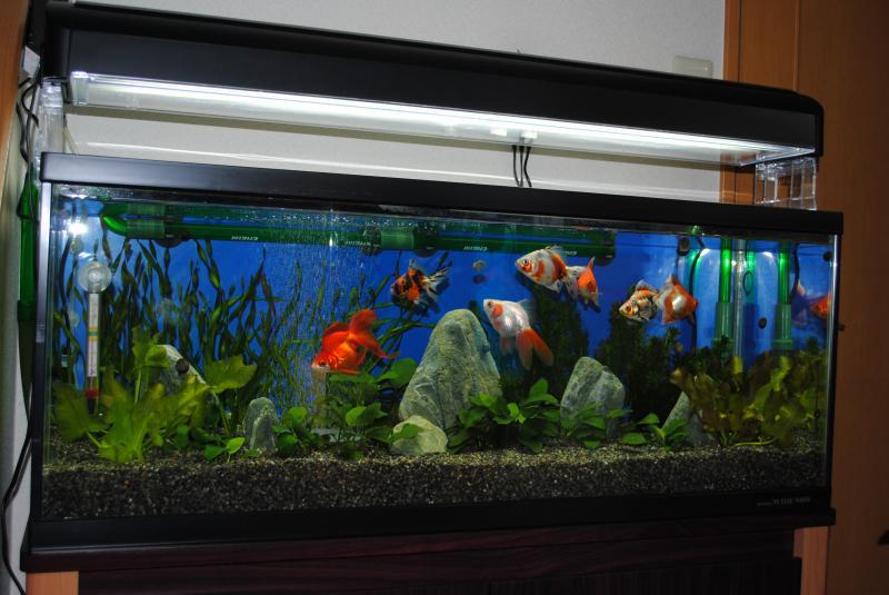 10/23金魚水槽2