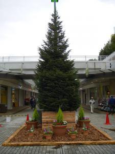 091112ツリー1