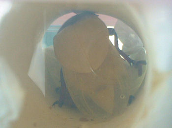 XAL04 芯蛹室羽化