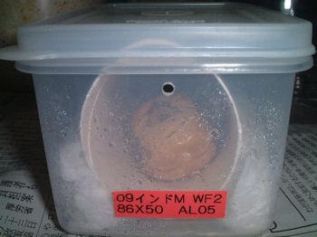 09インドAL-05芯蛹室