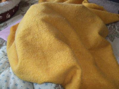 毛布のかたまり