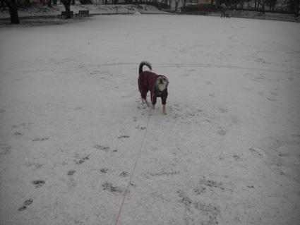 雪で遊ぶ1