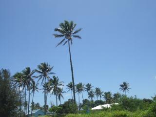 一番高い物はココナッツの木だったりする…