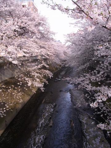 kandagawa10-1