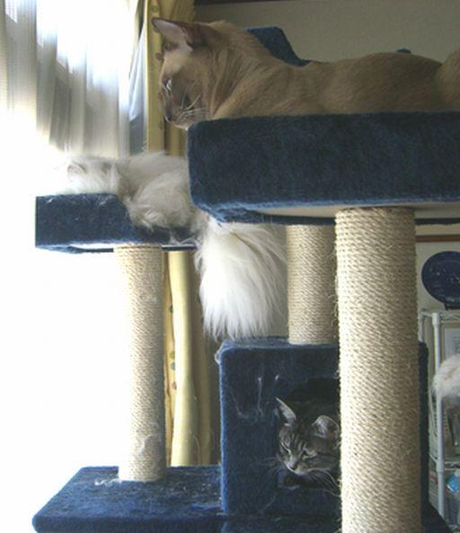 fluffy&yutaka&hikaru 2