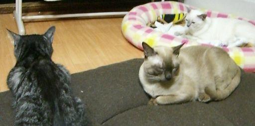 fluffy&hikaru&miu 6