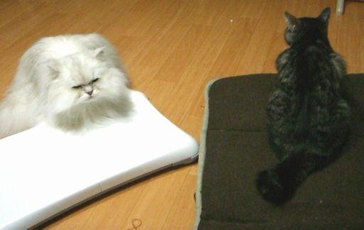 fluffy&yutaka 3