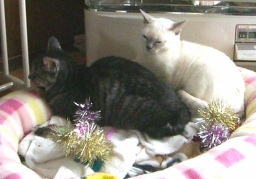 fluffy&miu 7
