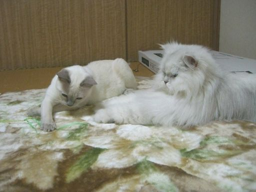 yutaka&miu 7