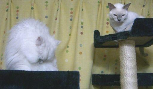 yutaka&miu 9