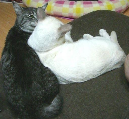 fluffy&miu 8