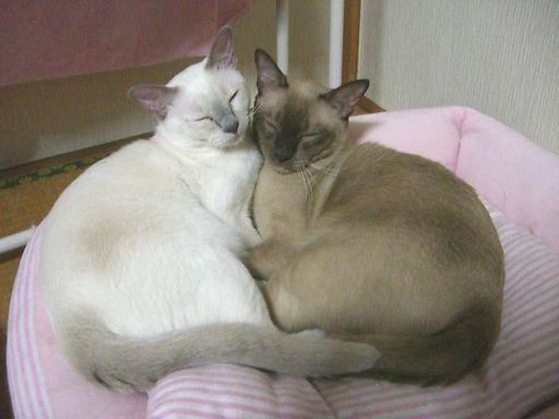 hikaru&miu 116