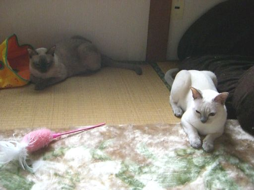 hikaru&miu 119