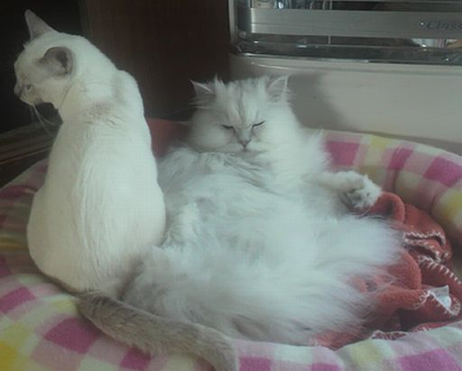 yutaka&miu 12