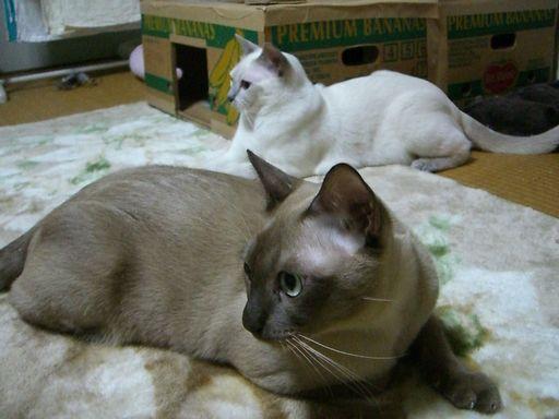 hikaru&miu 139