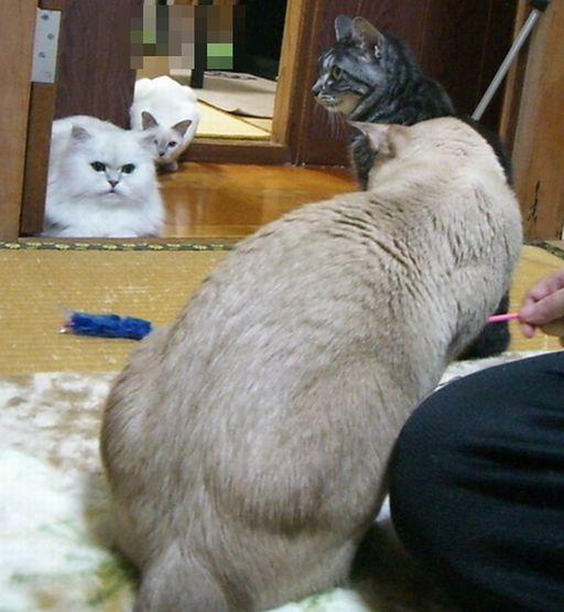 fluffy&yutaka&hikaru&miu 3