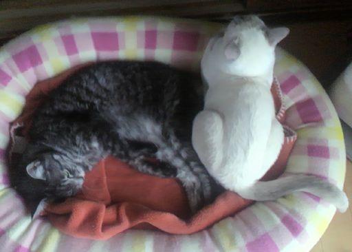 fluffy&miu 9