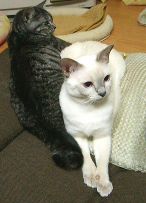 fluffy&miu 11