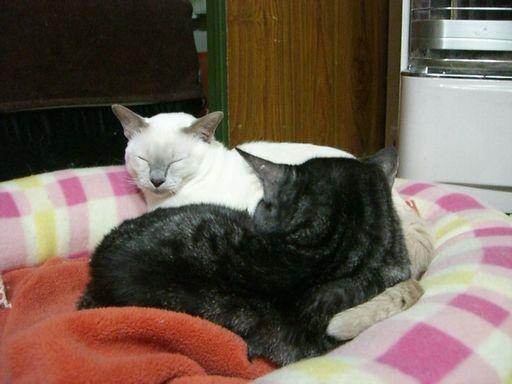 fluffy&miu 12