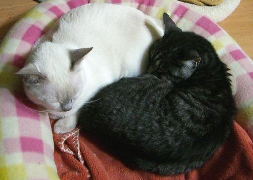 fluffy&miu 14