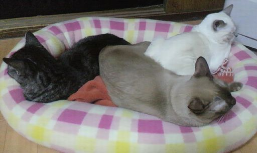 fluffy&hikaru&miu 10