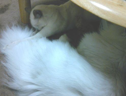 yutaka&miu 14