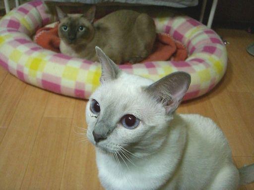 hikaru&miu 159