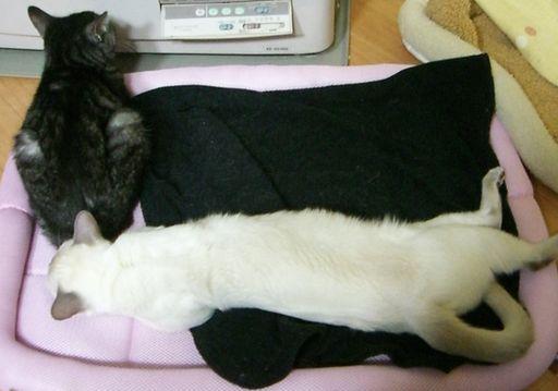 fluffy&miu 19