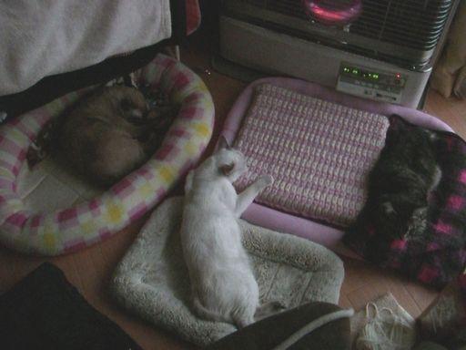 fluffy&hikaru&miu 19