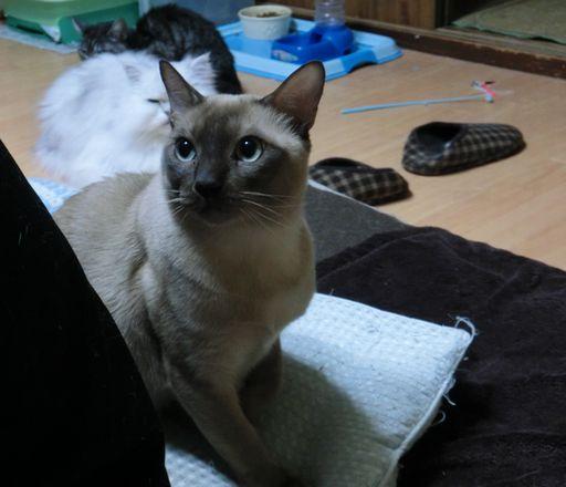 fluffy&yutaka&hikaru 4