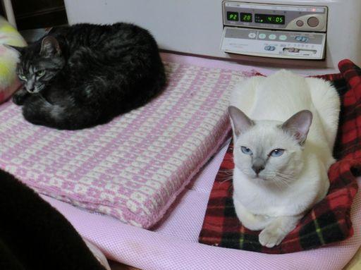 fluffy&miu 24