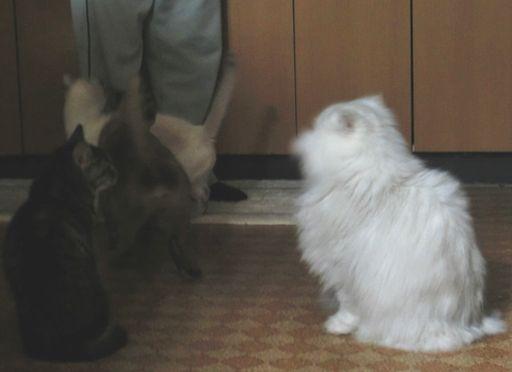 fluffy&yutaka&hikaru&miu 4