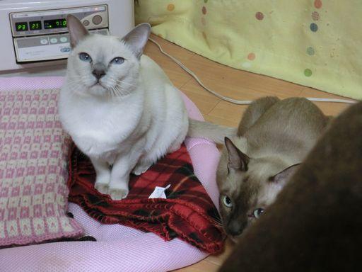 hikaru&miu 219