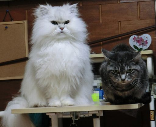 fluffy&yutaka 2