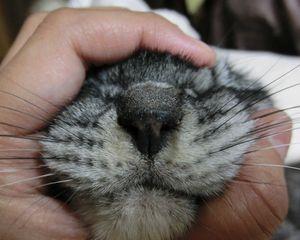 fluffy 137
