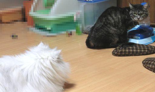 fluffy&yutaka 5