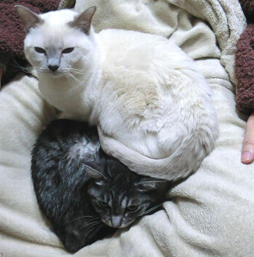 fluffy&miu 29