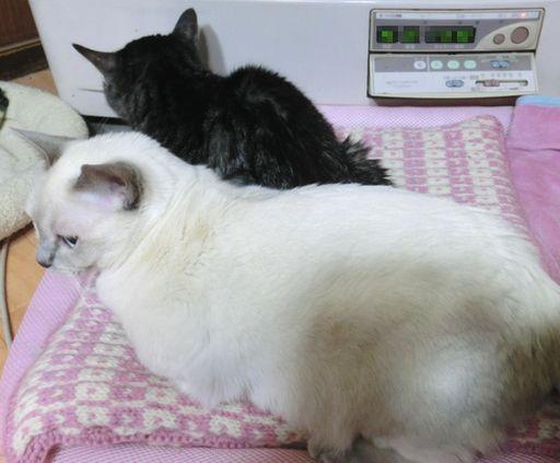 fluffy&miu 31