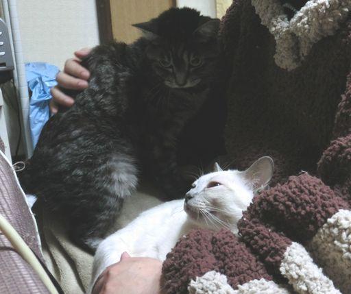 fluffy&miu 32