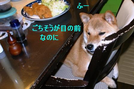 16_20100106084614.jpg